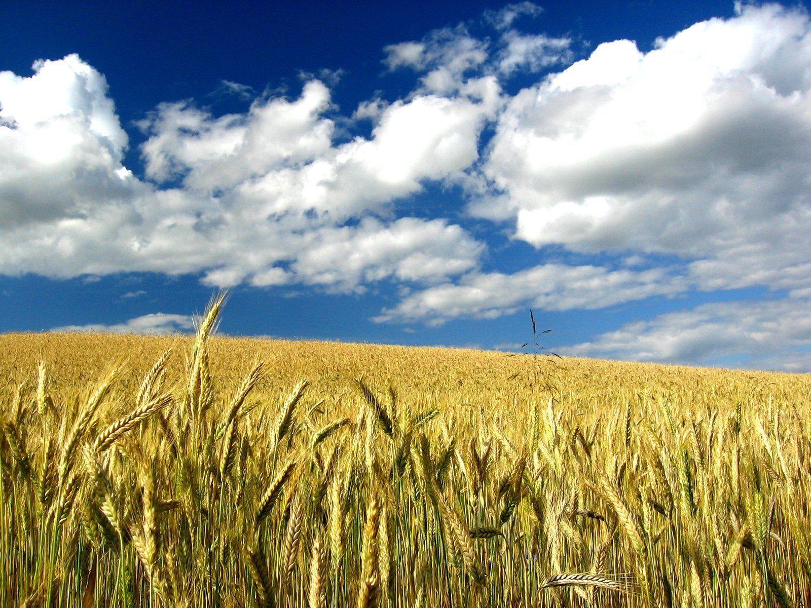 Agrar: Wieder ein Calendar Spread