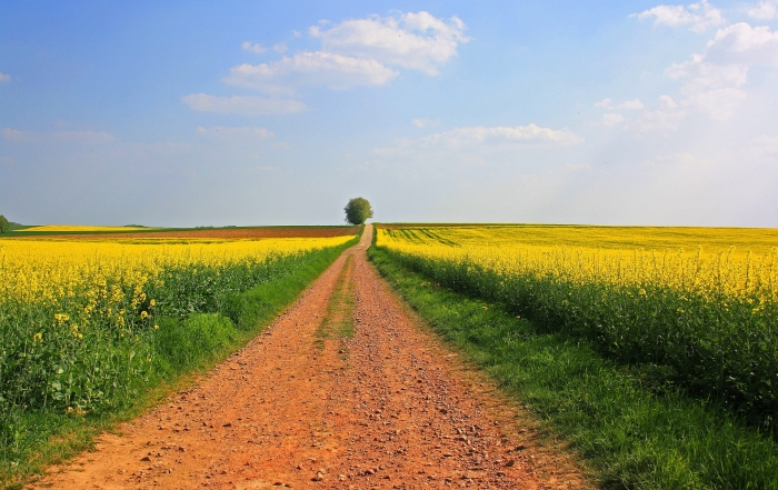 Agrar: Kalender-Spread auf Mais