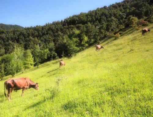 Agrar: Ein Blick in den Rindermarkt