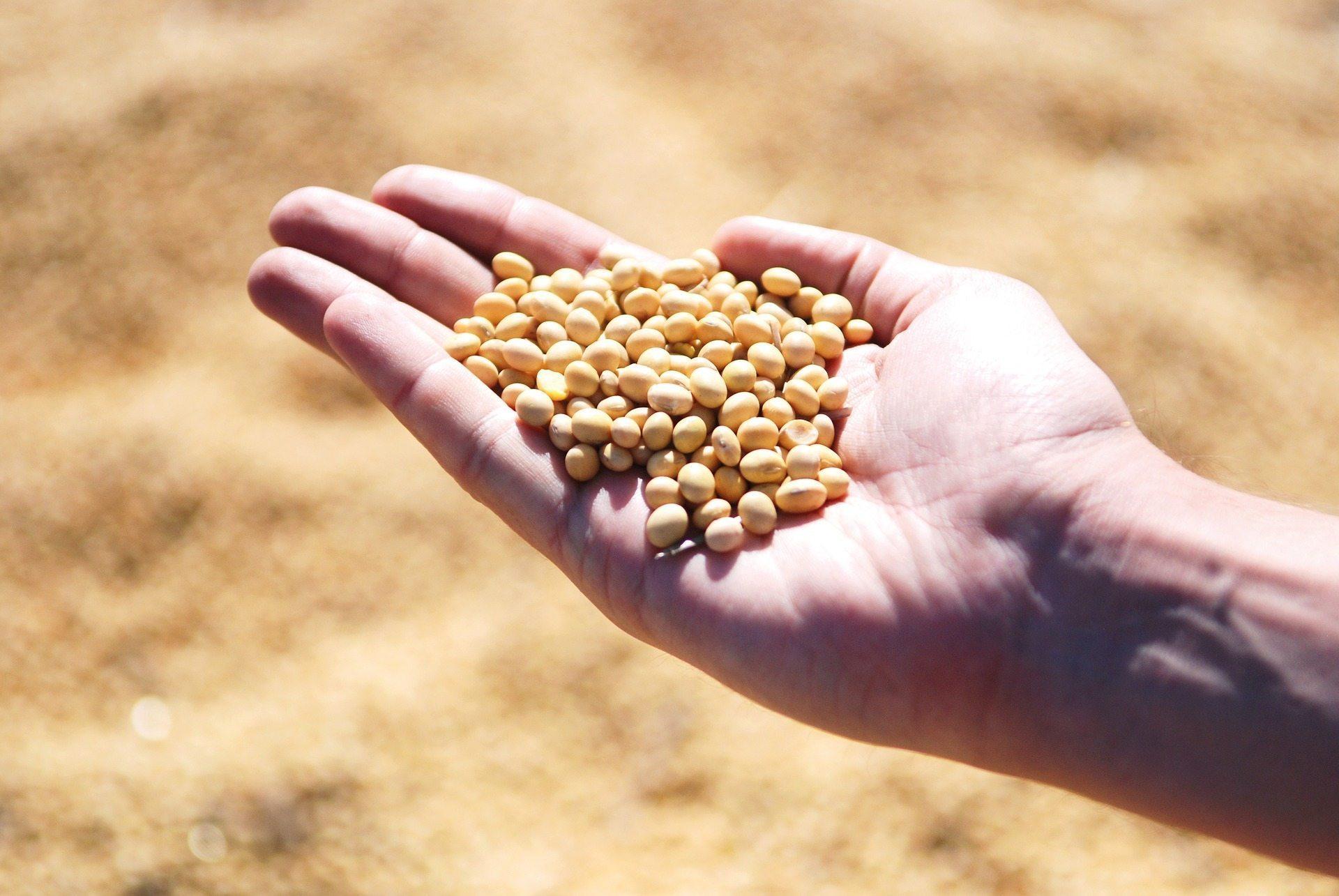 Agrar: Kalenderspread auf Sojabohnen