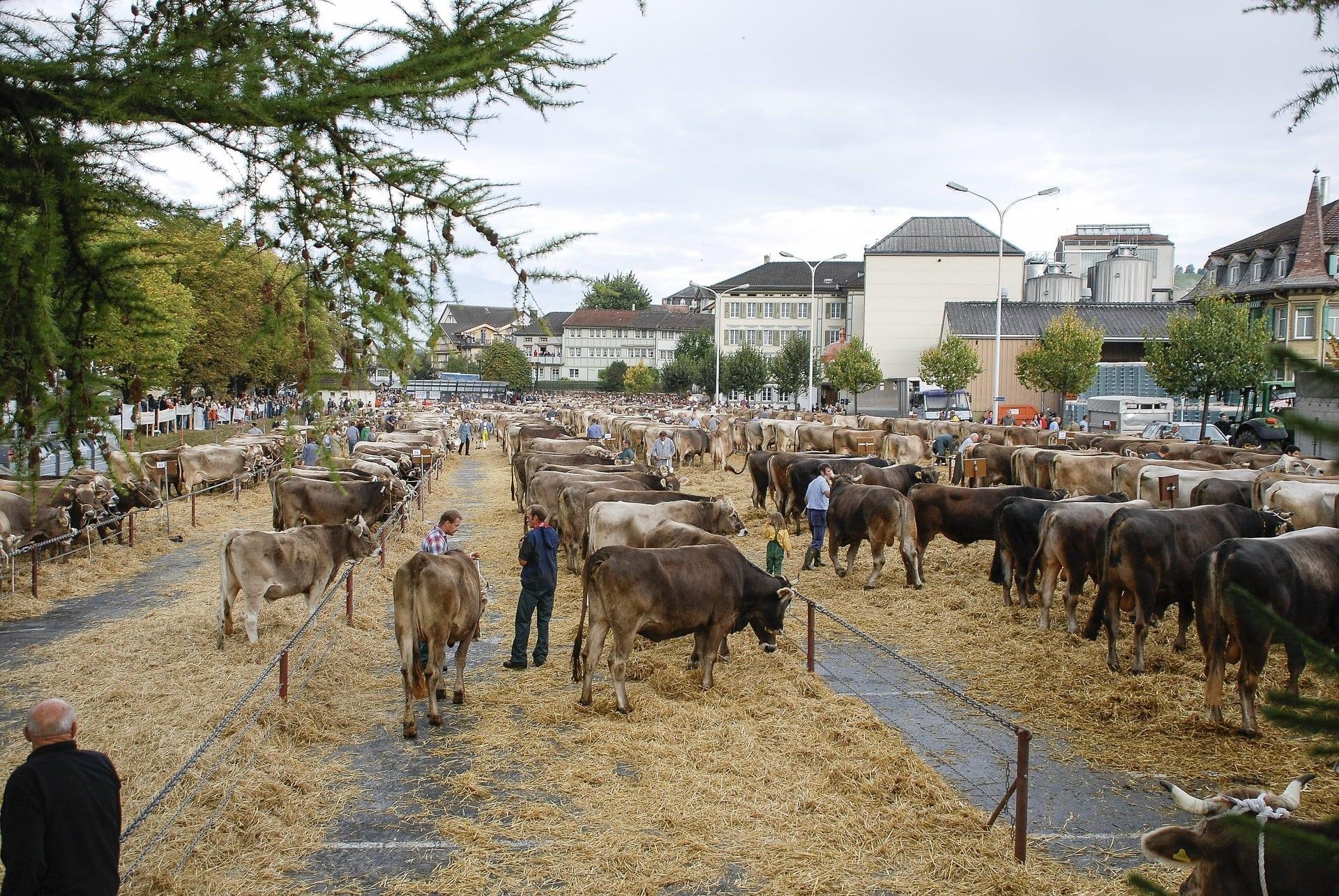 Saisonale Wette auf Rinderzahlen