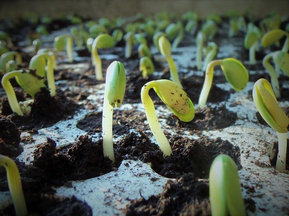 Terminmarkt: Weizen vs. Soja