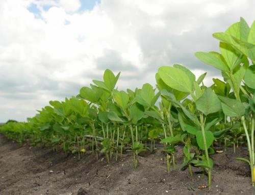 Terminmarkt: Sojabohnen gegen Weizen handeln