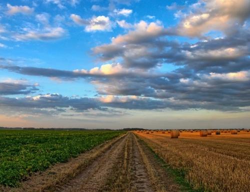 Agrar: Kalender-Spread auf Sojabohnen