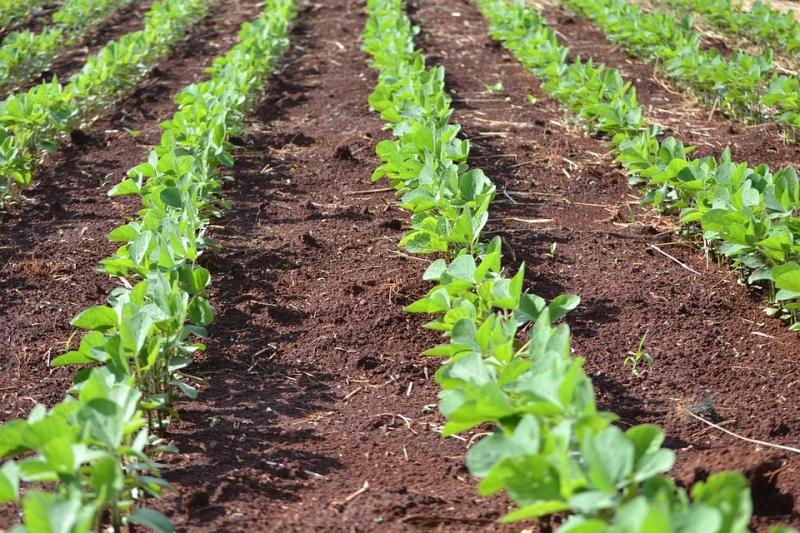 Ein neuer Ansatz bei Sojabohnen