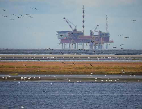 Die Zusicherung der großen Erdöl-Förderländer
